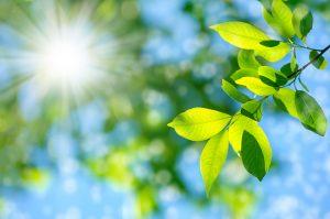 運動と新緑でリフレッシュ